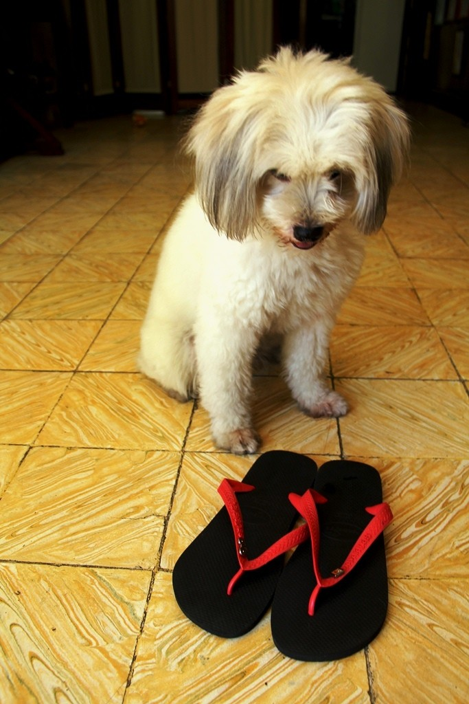 No, Jaja Colleen, please spare that one. You murdered two of my Havs when you were still a pup.